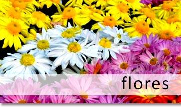 flores-ornamentales-importaciones-marjorie